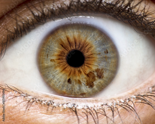 Foto auf AluDibond Iris Macro photo of human eye, iris, pupil, eye lashes, eye lids.