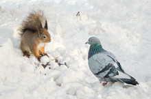 Meeting Squirrels And A Pigeon