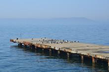 Владивосток, черный баклан и чайки на краю пирса во Владивостоке
