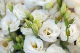 White beautiful Eustoma flowers , Lisianthus, tulip gentian, eustomas. Full frame background.