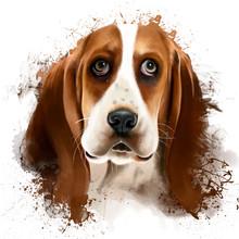 Dog Portrait Basset Hound, Closeup, Symbol, 2018