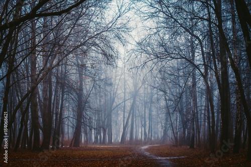 Láminas  Fantastic foggy forest in the mist