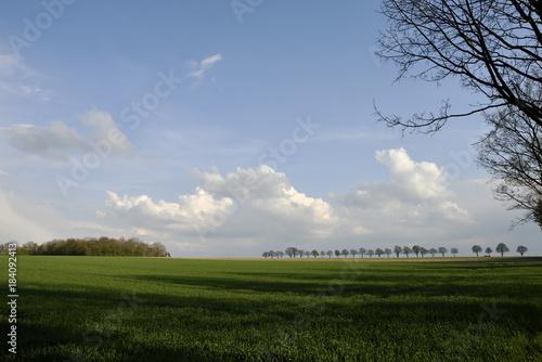 Foto op Aluminium Blauw Gruenes, weites Feld mit Baum Allee am Horizont, green, wide field with tree avenue on the horizon