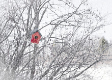 Birdhouse In The Falling Snow.