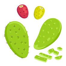 Nopal Cactus With Prickly Pears