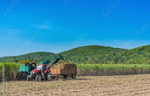 Photo Stands Caribbean Maschinelle Zuckerrohr Ernte auf dem Feld im Binnenland von Kuba - Serie Cuba Reportage