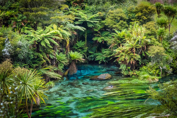 Te Waihou, Waikato, New Zealand
