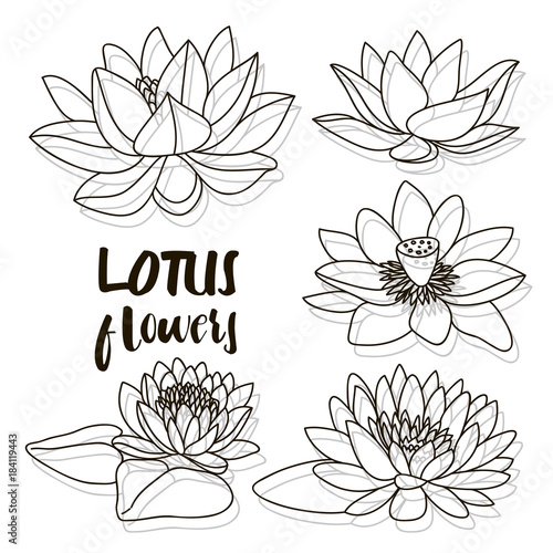 Set Of Lotus Flowers Buy This Stock Vector And Explore Similar