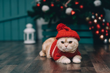 Cute Ginger Cat In Red Christm...