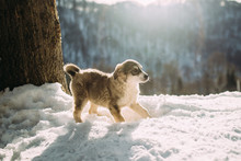 Dog In The Mountains In Winter