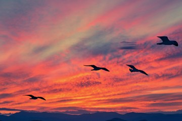 crimson sunset and seagulls in the sky