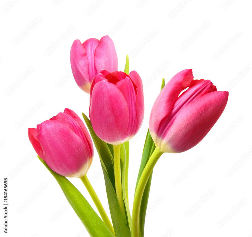 Fototapety, obrazy: Flower Tulips as Symbol of Romance and Love