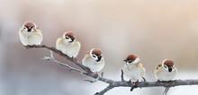 Five Funny Little Birds Sparro...