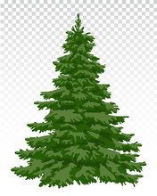 Beautiful Christmas Tree. Christmas. Winter. Nature In Details. Drawing. Vector. Eps 10.