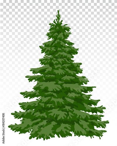 Fototapeta beautiful Christmas tree. Christmas. Winter. Nature in details. Drawing. Vector. Eps 10. obraz
