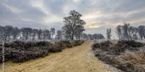 Valokuva  Winter sunrise over trail through frosty heathland