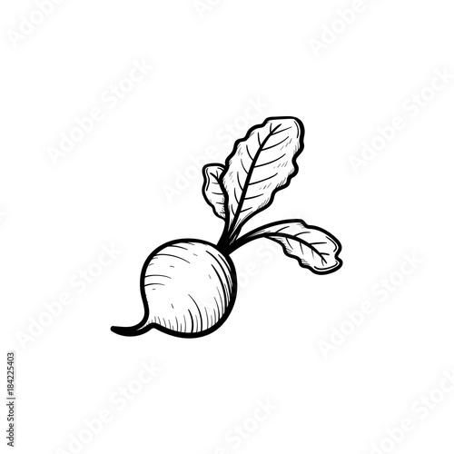 Fotografie, Obraz Vector hand drawn beet outline doodle icon
