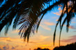 Beautiful soft sunset through the silhouette of palm leafes