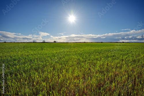 Fotografie, Obraz  Paisaje con hierba y sol