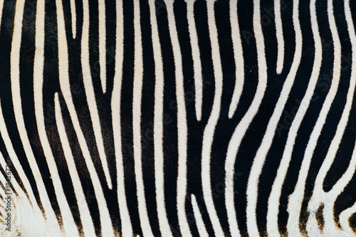 Aluminium Prints Zebra Black And White Zebra Skin Texture