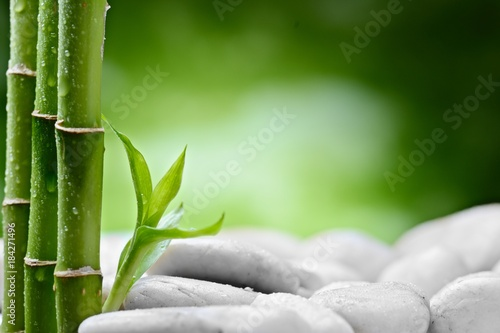 small bamboo sprout on the white stones