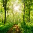 canvas print picture - Wanderweg durch grünen Wald im Frühling, Sonne strahlt durchs frische Laub