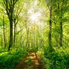 Wiosną szlak przez zielony las, słońce świeci przez świeże liście