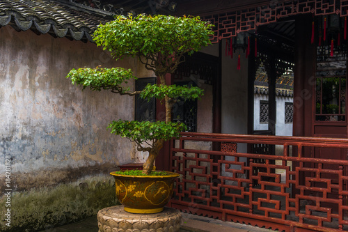 Photo  Yuyuan garden bonsai tree scenic view in Shanghai, China