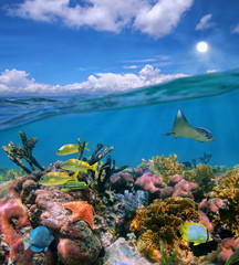Seascape over and under sea colorful coral reef