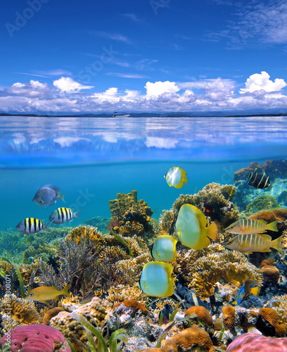 Over and under sea sky with colorful coral reef