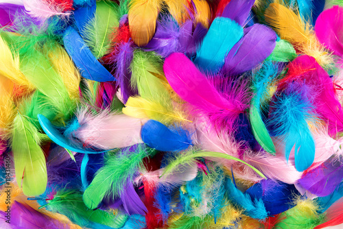 Background texture of brightly colored feathers Tableau sur Toile