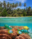 Above and below sea surface at the edge of a tropical beach with coconut palm trees and colorful fish with coral underwater