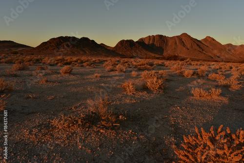 Staande foto Grijze traf. Mojave desert dawn landscape Pahrump, Nevada