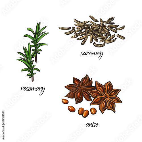 vector flat cartoon sketch hand drawn Spices, seasoning, flavorings and kitchen herbs set Canvas Print