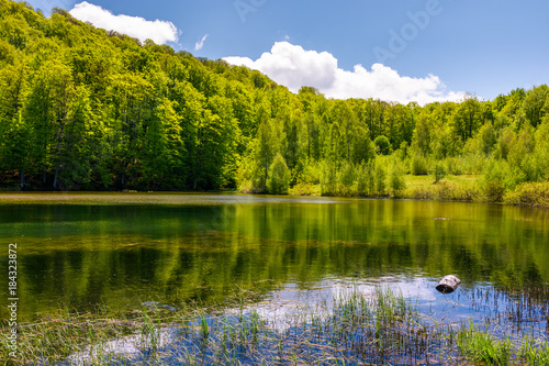 Foto op Aluminium Pistache lovely pond in the forest on a hillside. serene day in springtime outdoors