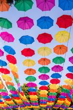 A Field Of Open Multi Colored ...
