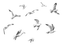 Watercolor Flying Seagulls