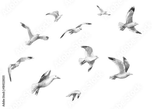 Fototapeta premium Akwarela latające mewy