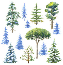Watercolor Conifers  And Everg...