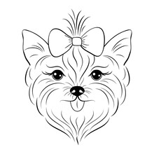 Head Of Yorkshire Terrier