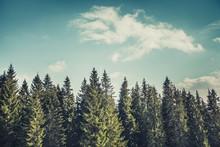 Wonderful Forest Landscape The...