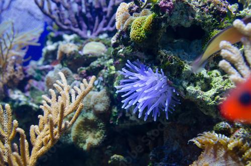 Papiers peints Recifs coralliens coral in deep blue sea