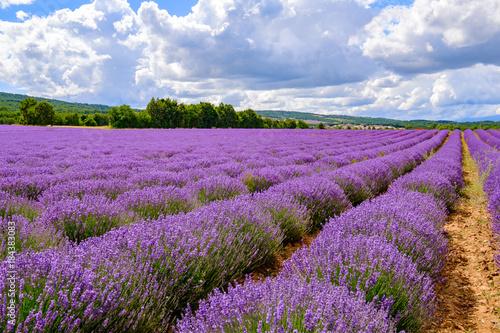 Tuinposter Lavendel Champ de lavande en Provence, France. Ciel bleu avec des nuages.