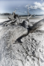 The Tree And The Beach In The...