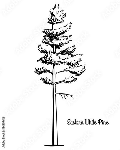 Vector Sketch Illustration Black Silhouette Of Eastern Northern