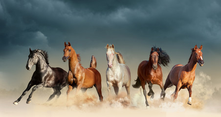 five horses run free in the desert