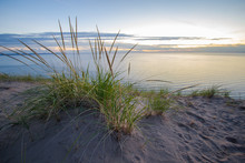 Summer Nights. Dune Grass On T...