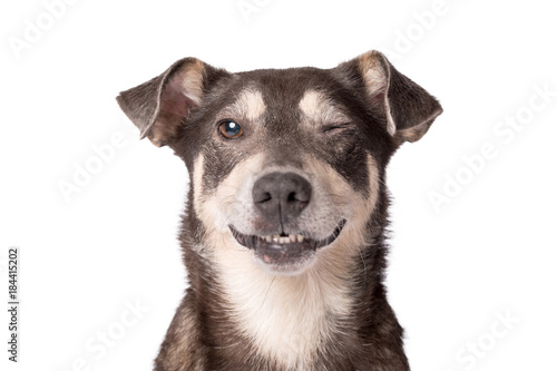 Foto  Portrait photo of an adorable mongrel dog isolated on white