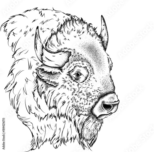 Photo Portrait of a bison