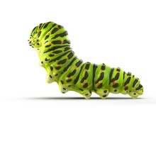 Caterpillar Papilio Xuthus. Isolated On White. 3D Illustration